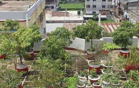ছাদবাগানে ডেঙ্গু'র ঝুঁকি,জেলায় রয়েছে ১০৩৫ টি ছাদবাগান